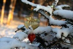Красные сердце и золото обхватывают на ветви сосны в парке на заходе солнца Стоковое Изображение RF