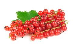 Красные смородины изолированные на белой предпосылке Стоковые Фото