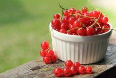 Красные смородины. селективный фокус стоковое фото rf