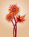 красные солнцецветы Стоковое фото RF