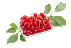 Красные сладостные вишни в пищевом контейнере пены Стоковое Фото