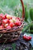 Красные сладостные вишни, конец-вверх, Стоковое Изображение RF