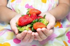 Красные сладостные клубники Стоковое Изображение RF