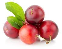 Красные сливы вишни изолированные на белой предпосылке Стоковые Изображения RF