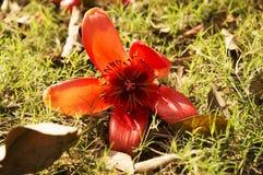 красные тени Стоковое фото RF