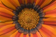 красные тени Стоковое Фото