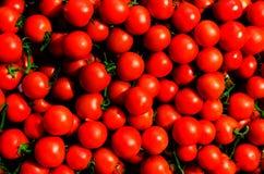 Красные томаты вишни в конце рынка вверх, могут использовать как предпосылка Стоковые Изображения RF