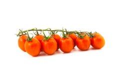 Красные томаты вишни на ветви Стоковые Изображения