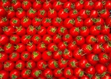 Красные томаты вишни сеть универсалии шаблона первоначально страницы карточки предпосылки приветствуя Стоковая Фотография