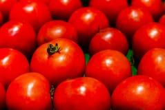 Красные томаты в стойле на супермаркете Стоковая Фотография RF