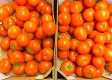 Красные томаты в супермаркете как предпосылка еды. Розница. Стоковые Изображения