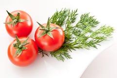 Красные томаты и трава укропа Стоковые Фото