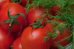 Красные томаты и укроп Стоковое Изображение