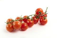 Красные томаты на ветви Стоковые Изображения