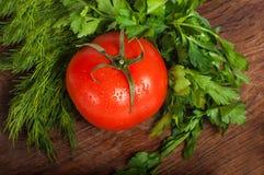 красные томаты Стоковое Изображение RF