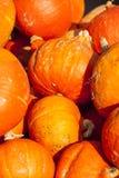 Красные тыквы тыквы cucurbita roter Хоккаидо от осени Стоковая Фотография RF