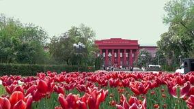 Красные тюльпаны в Киеве весной в парке Shevchenko акции видеоматериалы