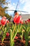 Красные тюльпаны перед турбиной стоковые изображения