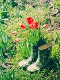 Красные тюльпаны в зеленых резиновых ботинках для детей в саде на солнечный весенний день Стоковое фото RF