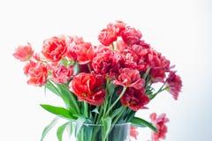Красные тюльпаны в крупном плане вазы Стоковое Фото