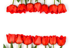 Красные тюльпаны в строке 2 Стоковые Изображения RF
