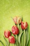 Красные тюльпаны на зеленой предпосылке Стоковое фото RF