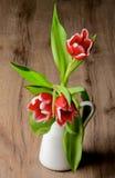 Красные тюльпаны Стоковая Фотография RF