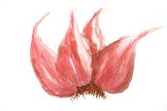 Красные луки, картина акварели Стоковые Фото