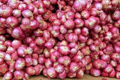 Красные луки на рынке Стоковые Изображения RF