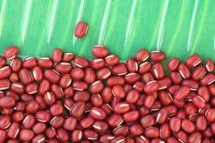 Красные фасоли Стоковые Фото