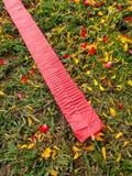Красные фейерверки на лужайке Стоковые Фото