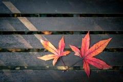 Красные фиолетовые и желтые листья осени Стоковое фото RF