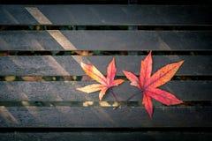 Красные фиолетовые и желтые листья осени Стоковые Фото