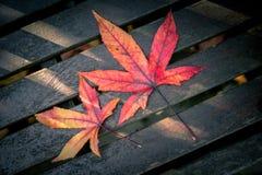 Красные фиолетовые и желтые листья осени Стоковая Фотография RF