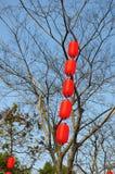 Красные фонарики на дереве Стоковое фото RF