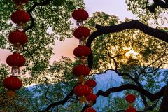 Красные фонарики на дереве стоковая фотография rf