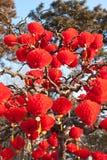 Красные фонарики Стоковое Фото