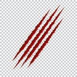 Красные царапины когтей - вектор Talons режут животного кота, собаки, тигра, льва, иллюстрации медведя иллюстрация штока