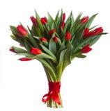 Красные цветения тюльпанов стоковые изображения rf