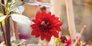Красные цветки вокруг фото сада уникального стоковые изображения rf