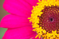 Красные цветки в ближайшем будущем Стоковая Фотография RF