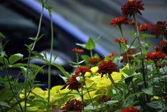 Красные цветки в городке Стоковая Фотография RF