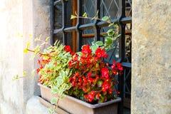 красные цветки в коробках на windowsill стоковая фотография rf
