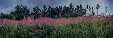 Красные цветки в погоде дождя стоковые фото