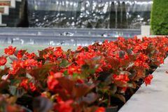 Красные цветки в саде стоковые фотографии rf