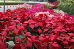 Красные цветки в саде стоковое изображение rf