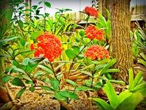 Красные цветки в саде Стоковая Фотография RF