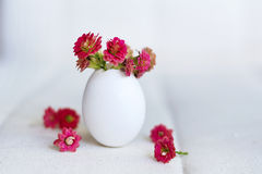 Красные цветки в eggshell Стоковые Фотографии RF