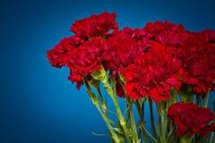 Цветки гвоздики Стоковое Фото