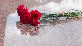 Красные цветки гвоздики на камне гранита Стоковые Фото